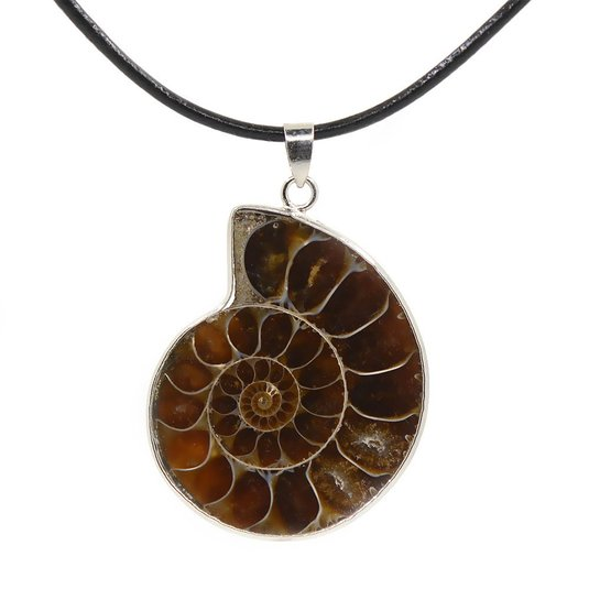 Justinstones Natural Ammonite Fossil Pendant Necklace 18